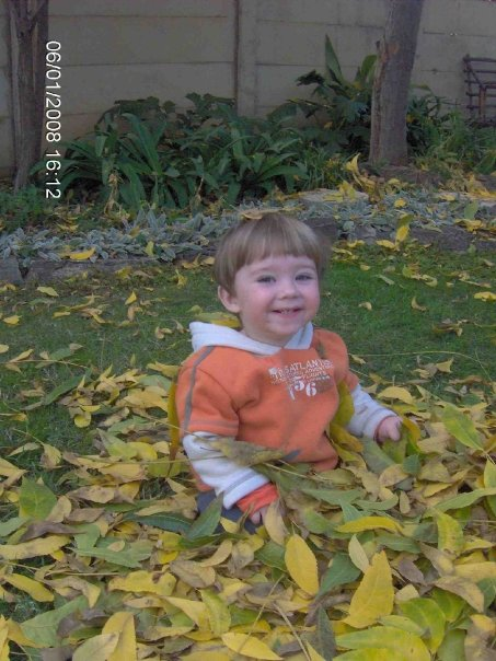Daniel in Leaves